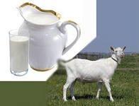 В чем польза козьего молока
