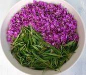 полезные свойства иван-чая