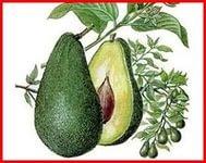 аллергия на авокадо1