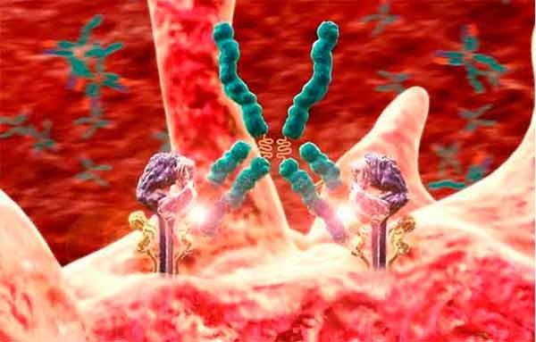 Симптомы и лечение аутоиммунного заболевания