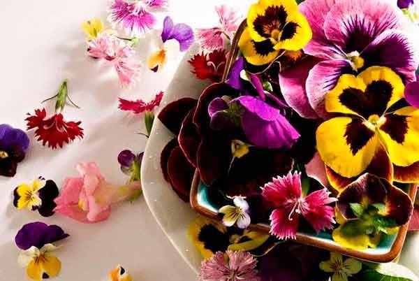 Консервирование съедобных цветов